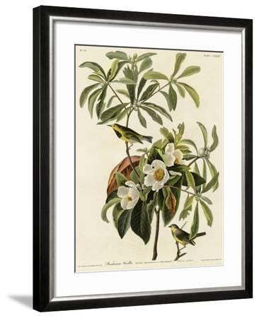 Bachmans Warbler--Framed Giclee Print