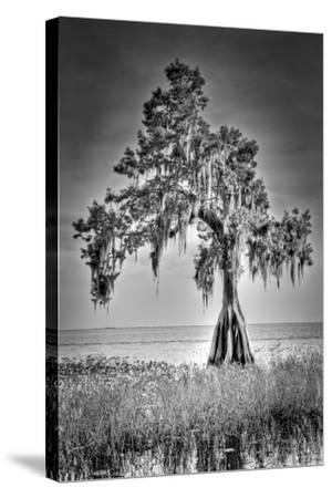 Big Cypress-Dennis Goodman-Stretched Canvas Print