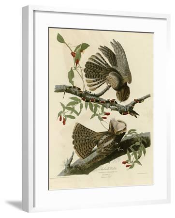 Chuck Wills Widow--Framed Giclee Print