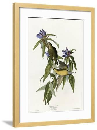 Connecticut Warbler--Framed Giclee Print