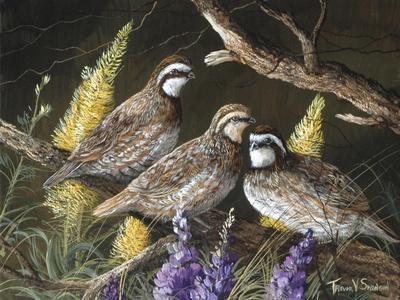 Bobwhite Trio 1-Trevor V. Swanson-Framed Giclee Print