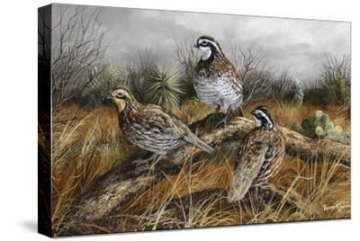 Bobwhite Trio 2-Trevor V. Swanson-Stretched Canvas Print