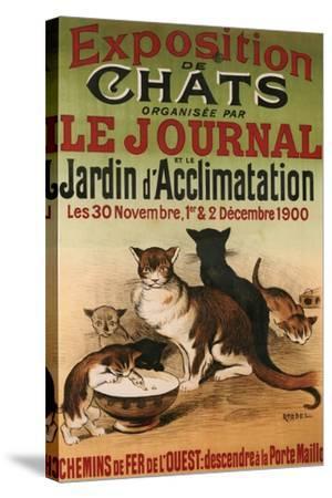 Exposition De Chats--Stretched Canvas Print