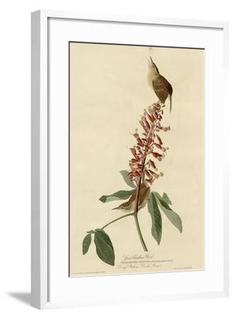 Great Carolina Wren--Framed Giclee Print