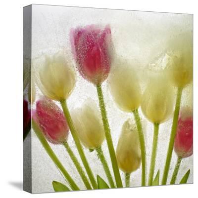 Flores Congeladas-Moises Levy-Stretched Canvas Print