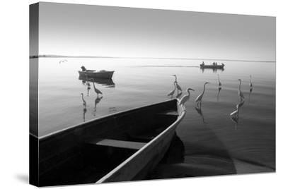 Herons and 3 Boats-Moises Levy-Stretched Canvas Print