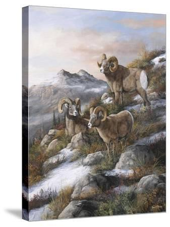 High Country Kings-Trevor V. Swanson-Stretched Canvas Print