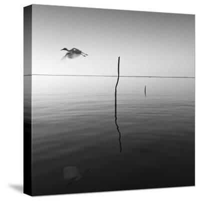 Fly-Moises Levy-Stretched Canvas Print
