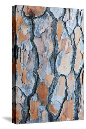 Pine Tree Bark-Frank Lukasseck-Stretched Canvas Print