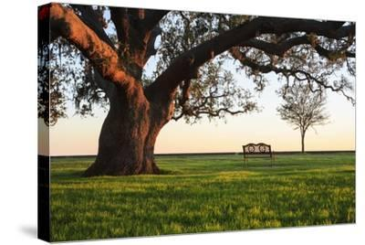 A Grand Oak Tree Overhangs a Lone Bench at Sunset.-Jason Langley-Stretched Canvas Print