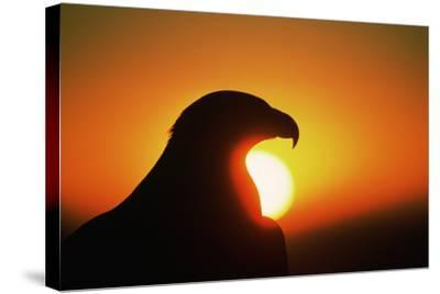 Golden Eagle at Sunrise-W^ Perry Conway-Stretched Canvas Print