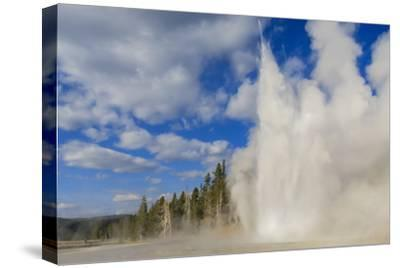 Lone Observer Watches Grand Geyser Erupt, Upper Geyser Basin, Yellowstone National Park-Eleanor Scriven-Stretched Canvas Print