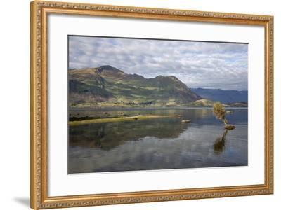 Reflection in Lake Wanaka, Wanaka, Otago, South Island, New Zealand, Pacific-Stuart Black-Framed Photographic Print