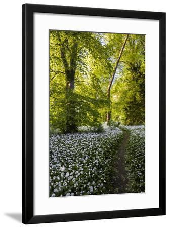 Flowers in a Woods Near Badbury Hill, Oxford, Oxfordshire, England, United Kingdom, Europe-Matthew Williams-Ellis-Framed Photographic Print