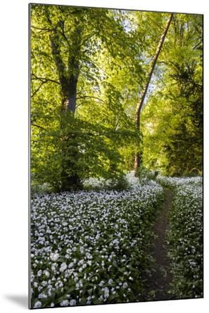 Flowers in a Woods Near Badbury Hill, Oxford, Oxfordshire, England, United Kingdom, Europe-Matthew Williams-Ellis-Mounted Photographic Print