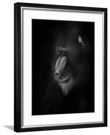 Focussed-Ruud Peters-Framed Photographic Print