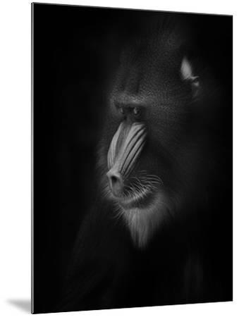 Focussed-Ruud Peters-Mounted Photographic Print