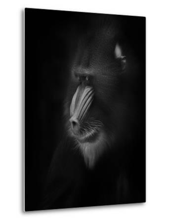 Focussed-Ruud Peters-Metal Print
