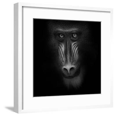 Eye Contact-Ruud Peters-Framed Photographic Print