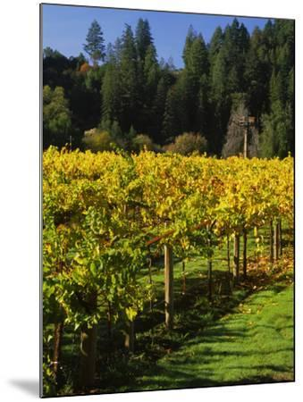 Vineyard, Russian River Valley, Sonoma, California, USA--Mounted Photographic Print