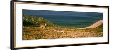 Deer at Waterton Lake, Waterton Lakes National Park, Alberta, Canada--Framed Photographic Print
