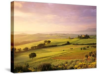 Trees in a Field at Sunrise, Villa Belvedere, Val D'Orcia, Siena Province, Tuscany, Italy--Stretched Canvas Print