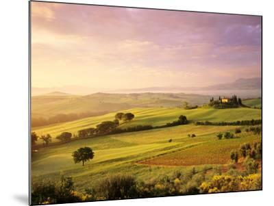 Trees in a Field at Sunrise, Villa Belvedere, Val D'Orcia, Siena Province, Tuscany, Italy--Mounted Photographic Print