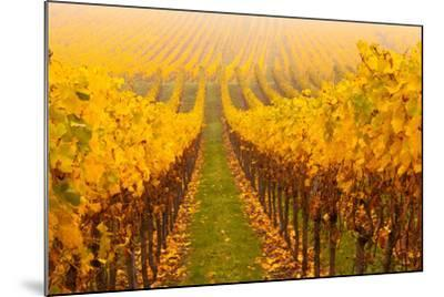 Vine Crop in a Vineyard, Riquewihr, Alsace, France--Mounted Photographic Print