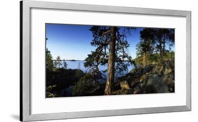Trees at the Lakeside, Saimaa, Puumala, Southern Savonia, Eastern Finland, Finland--Framed Photographic Print