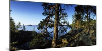 Trees at the Lakeside, Saimaa, Puumala, Southern Savonia, Eastern Finland, Finland--Mounted Photographic Print