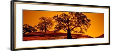 Silhouette of California Oaks Trees, Central Coast, California, USA--Framed Photographic Print