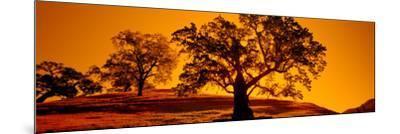 Silhouette of California Oaks Trees, Central Coast, California, USA--Mounted Photographic Print