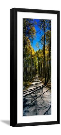 Aspen Trees in a Forest, Californian Sierra Nevada, California, USA--Framed Photographic Print