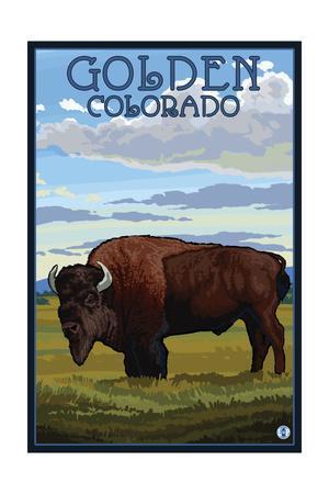 Golden, Colorado - Bison Scene-Lantern Press-Framed Art Print