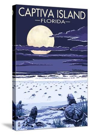 Captiva Island, Florida - Sea Turtles Hatching-Lantern Press-Stretched Canvas Print