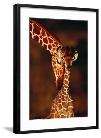 Giraffe and Baby-Lantern Press-Framed Art Print