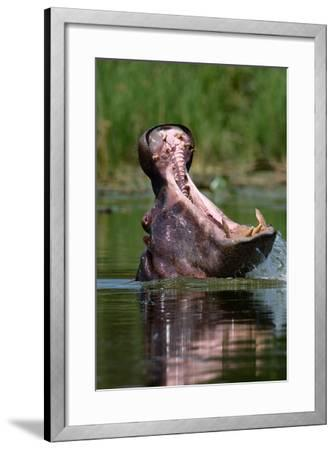 Hippopotamus-Lantern Press-Framed Art Print