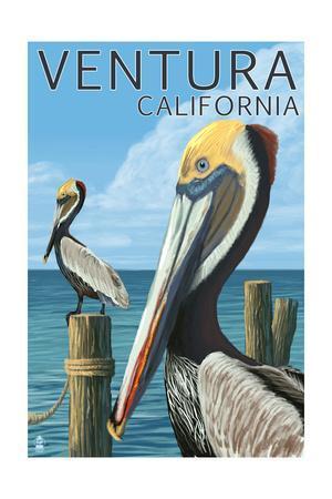 Ventura, California - Brown Pellican-Lantern Press-Framed Art Print