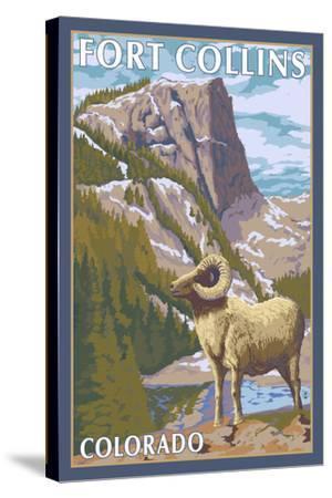 Fort Collins, Colorado - Big Horn Sheep-Lantern Press-Stretched Canvas Print