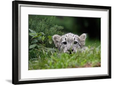 Leopard Cub-Lantern Press-Framed Art Print