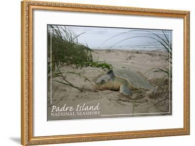 Padre Island National Seashore - Kemp's Ridley Sea Turtle Hatching-Lantern Press-Framed Art Print