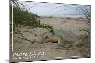 Padre Island National Seashore - Kemp's Ridley Sea Turtle Hatching-Lantern Press-Mounted Art Print