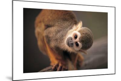Squirrel Monkey-Lantern Press-Mounted Art Print