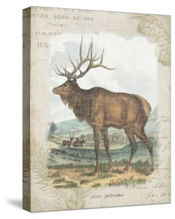 Woodland Stag II-Hugo Wild-Stretched Canvas Print