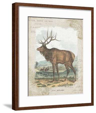Woodland Stag II-Hugo Wild-Framed Art Print