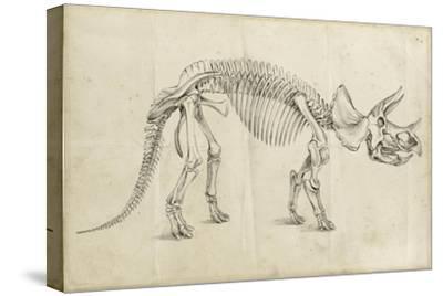 Dinosaur Study II-Ethan Harper-Stretched Canvas Print