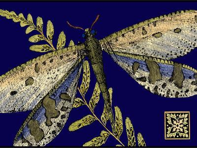 Mini Shimmering Dragonfly III-Vision Studio-Stretched Canvas Print