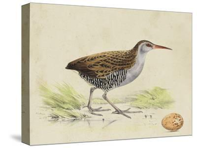 Meyer Shorebirds III-H^ l^ Meyer-Stretched Canvas Print