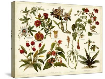 Tropical Botany Chart II-Meyers-Stretched Canvas Print