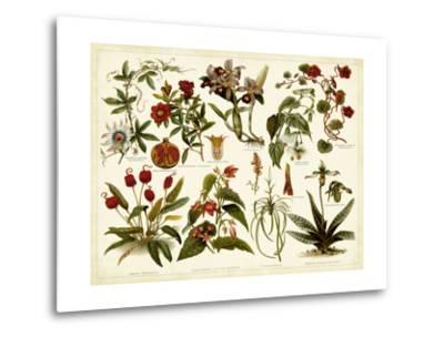 Tropical Botany Chart II-Meyers-Metal Print